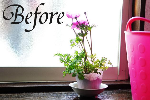 anemone plant before copy