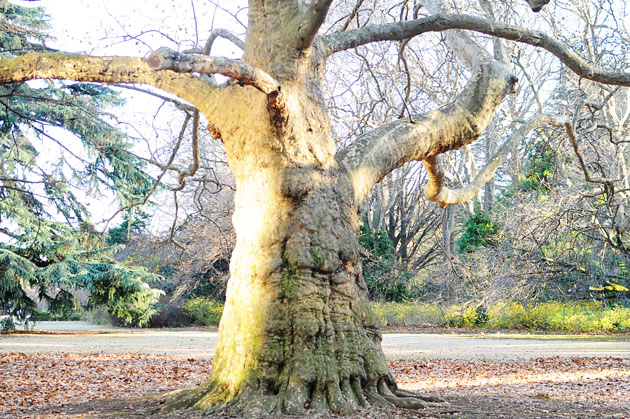 Big tree in Shinjyuku Gyoen
