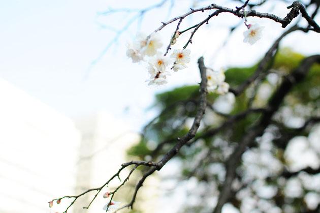 Flowers at Hamarikyu Park1