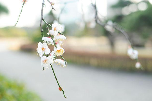 Flowers at Hamarikyu Park2