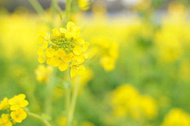 Flowers at Hamarikyu Park3