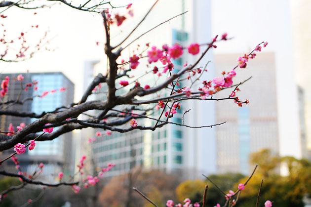 Flowers at Hamarikyu Park4