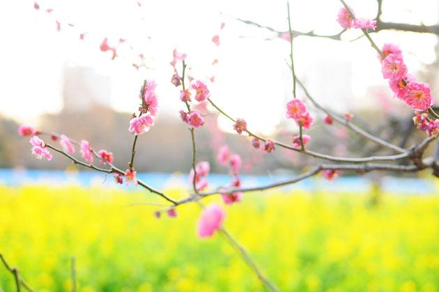 Flowers at Hamarikyu Park5