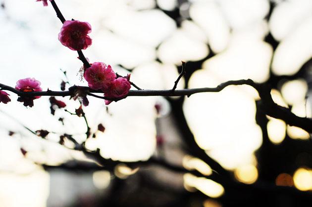 Flowers at Hamarikyu Park6