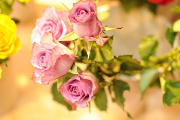 afrika rose7